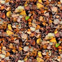 Leafy ground 18