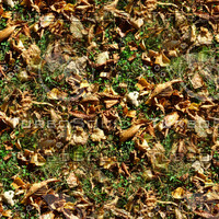 Grass with autumn leaves 22