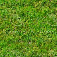 Mossy ground 22