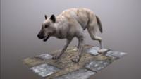 wolf polys ready max