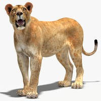 lioness rigged cat animation 3d max