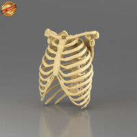 anatomy medical 3d model