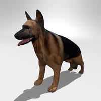 german shepherd dog c4d