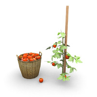max tomatoes plant basket