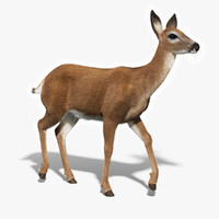 3d model white tailed doe fur