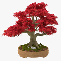 japanese maple 3d max