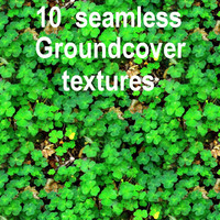 Groundcover Collection 2