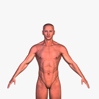 3d model anatomy human male character