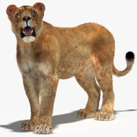 lioness rigged fur cat