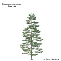 Pine-tree_06