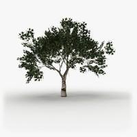 Tree model 1