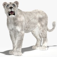 3d model lioness white rigged fur