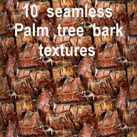Palm Tree Bark Collection 2