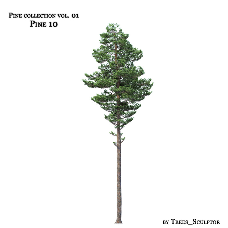 pine_10_sm.jpg