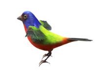 3d ma bunting bird