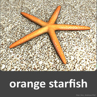orange starfish 3d model
