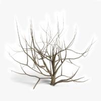 3d model dead bush