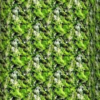Mossy tree bark 39