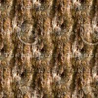 Tree bark 62