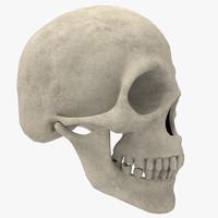 human skull 3d fbx
