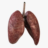 3ds max rigged lungs
