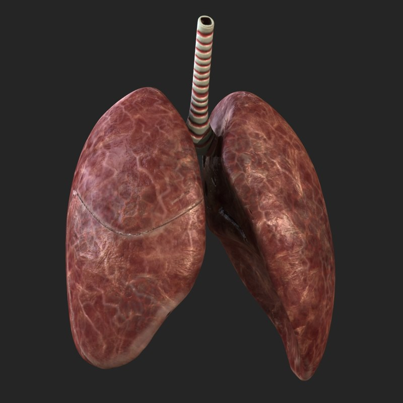 obj rigged lungs