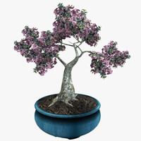 3d potted bonsai tree model