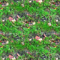 Grass with autumn leaves 24