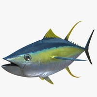 tuna fish obj