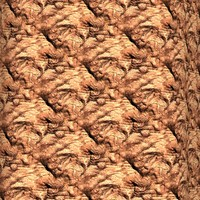 Palm tree bark 27