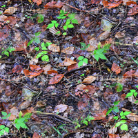 Leafy ground 23