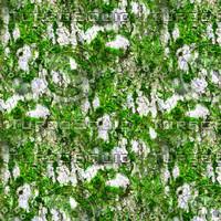 Mossy tree bark 40