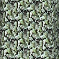 Tree bark 65