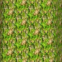 Mossy tree bark 43