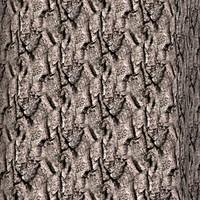 Tree bark 66