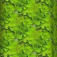Mossy tree bark 41