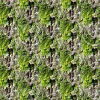 Mossy tree bark 42