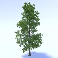 tree obj