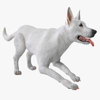 dsmax white shepherd dog pose