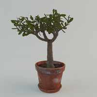 3d model small tree plant pot