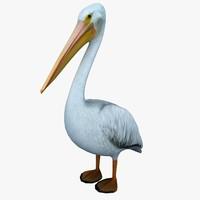 3d model pelican standing