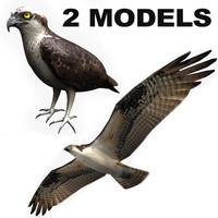 2 osprey 3d max