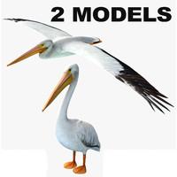 3d model of 2 pelican