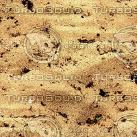 Sand 41
