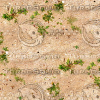 Sand with weeds 1