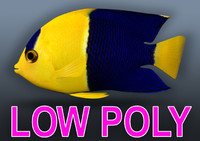 3ds max angel angelfish fish