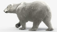 3d polar bear