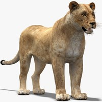 3ds max lioness modelled
