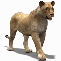 lioness rigging animation cat 3d max
