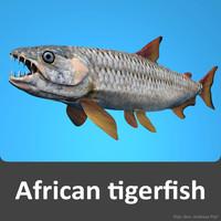3d model of african tigerfish africa piranha fish